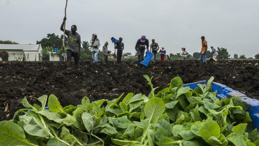 Trabajo en el campo/ Fuente: Presidencia de la República Dominicana